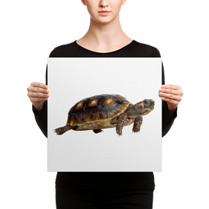 Tortoise Canvas