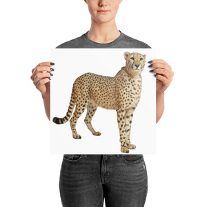Cheetah Photo paper poster