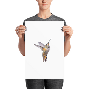 Hummingbird Photo paper poster