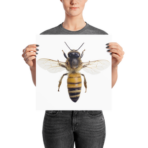 Honey-Bee Photo paper poster