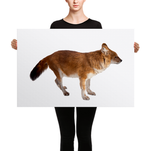 Dhole Canvas