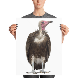 Vulture Photo paper poster