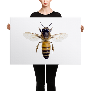Honey-Bee Canvas