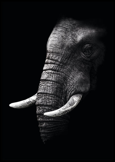 SORT ELEFANT PLAKAT 🐘