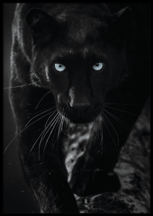 SORT PANTHER PLAKAT 🖤