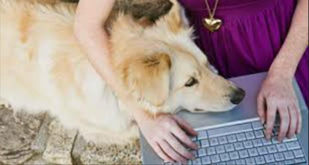 The Need to Acquire Pet Supplies and Care Online
