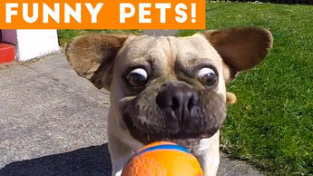 Pet Videos to make you smile!