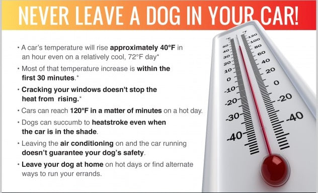 It's Not Cool to leave your pet in a Hot car!