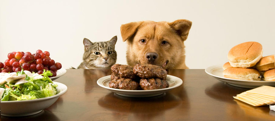 People Foods to Avoid Feeding Your Pets