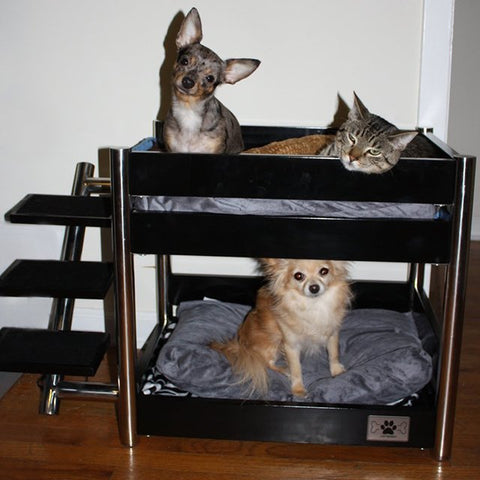 multiple pets beds pet kisses dog cat