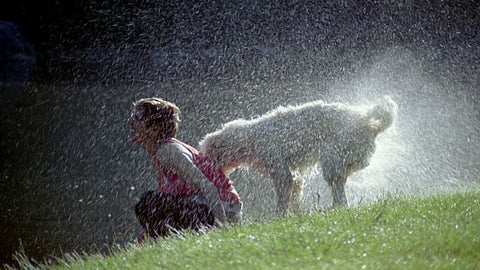 dog shaking water woman pet kisses