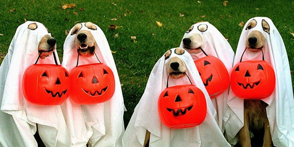 dog ghost halloween