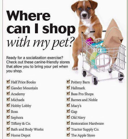 pet friendly stores