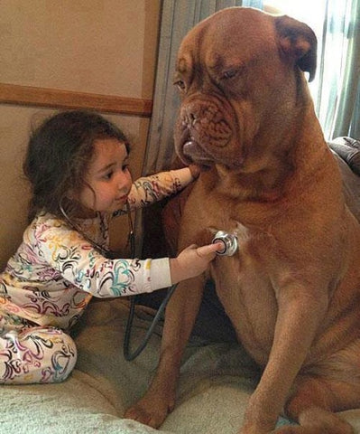 dog doctor kid pet kisses