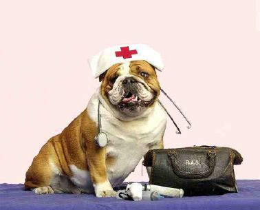 pet kisses multiple pets first aid
