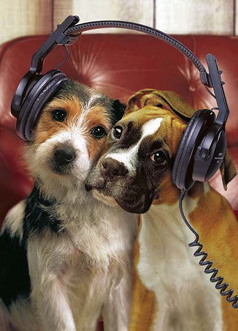 pet kisses multiple pets music