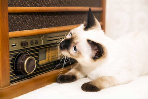 cat music pet kisses