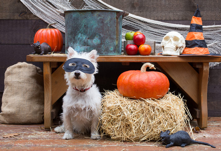 pet halloween games
