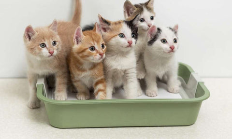 pet kisses multiple pets cats kittens in litter box