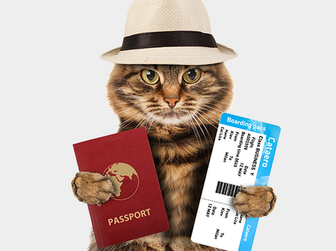 pet travel overseas passport