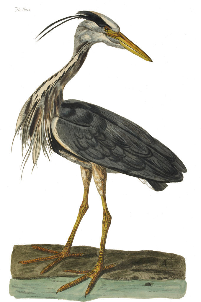 Detail of Heron by P Mazel Brown