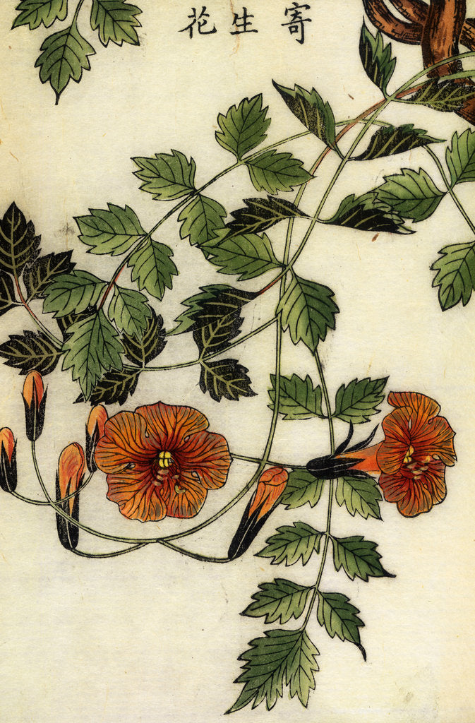 Detail of Trumpet flowers by Shimada Mitsufusa