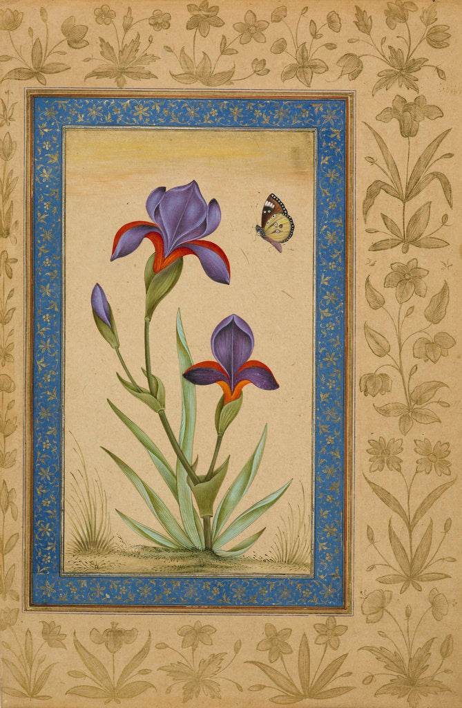 Detail of Blue iris with butterfly by Anonymous