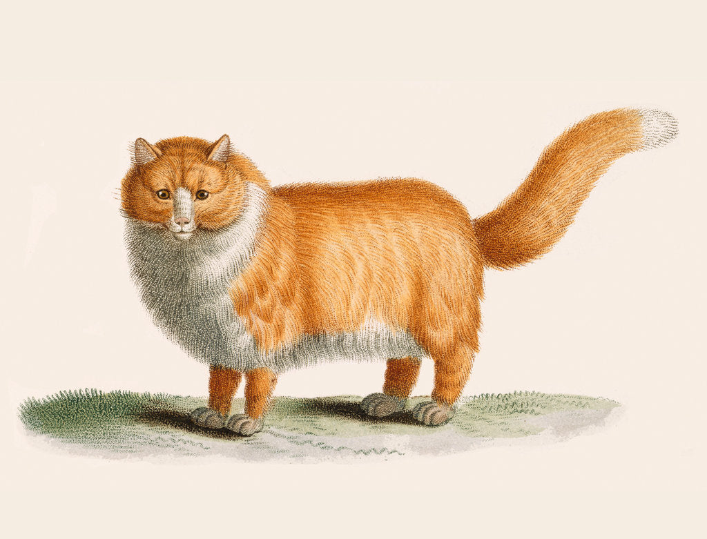 Detail of A ginger cat by J B Huet