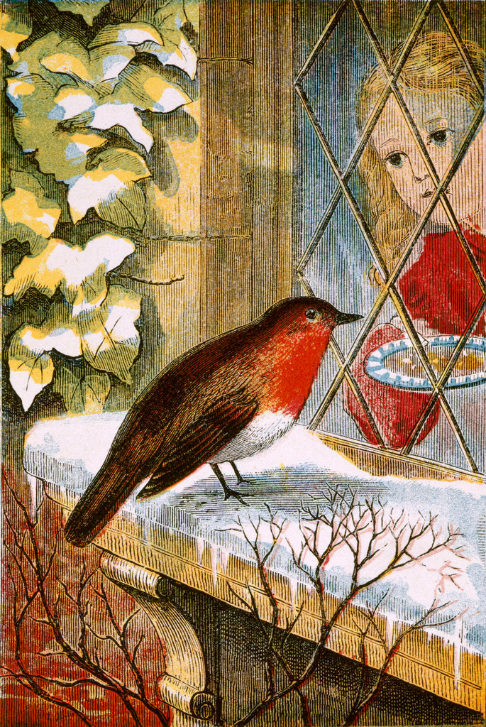 Detail of Robin by Anonymous