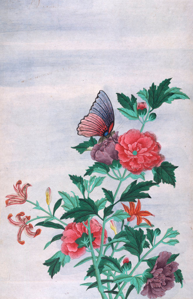 Detail of A butterfly resting on a flower by Shiv Dayal