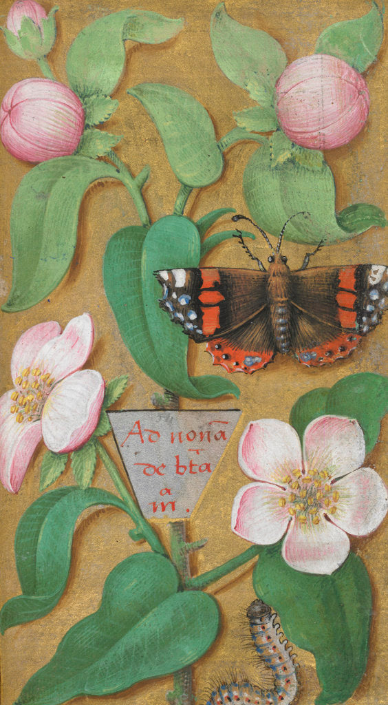 Detail of Flowers, caterpillar and butterfly by Anonymous