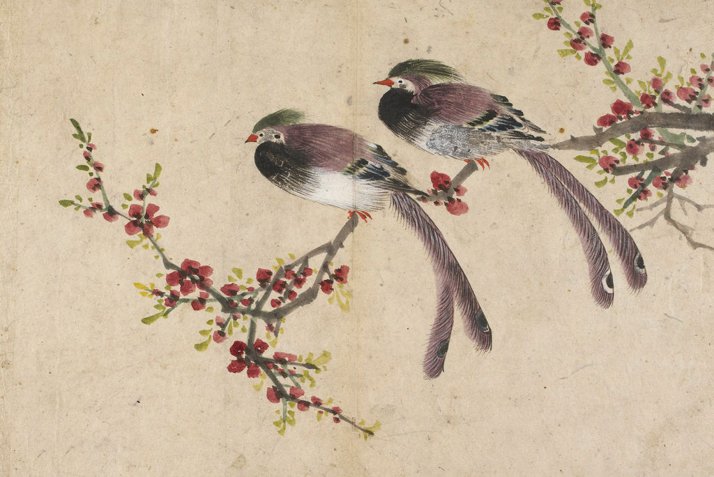Detail of Long-tailed birds on plum tree branch by Kyomjae