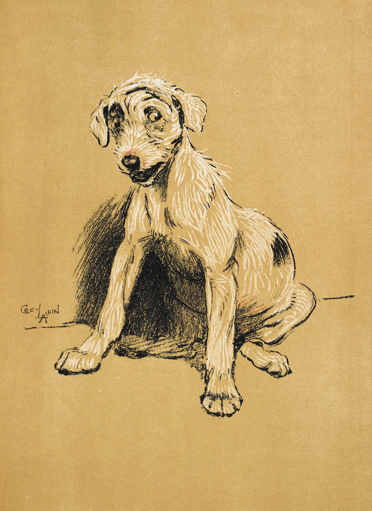 Detail of Dog by Cecil Aldin