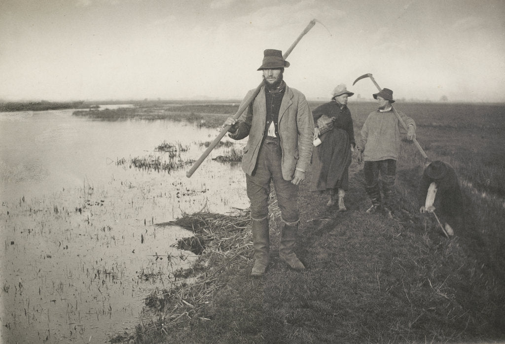 Detail of Coming home from the marshes, c. 1886 by Peter Henry Emerson