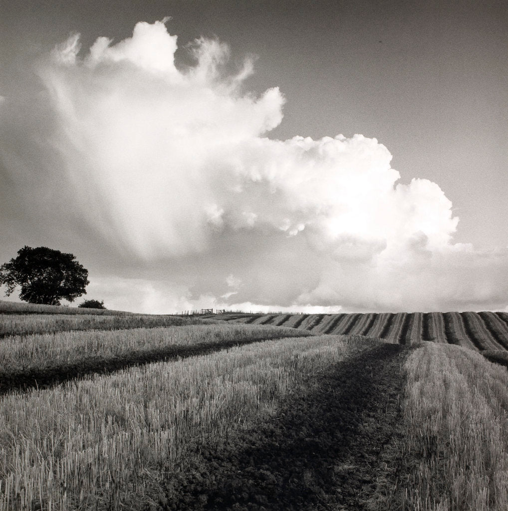 Detail of Large White Cloud near Bilsington by Fay Godwin