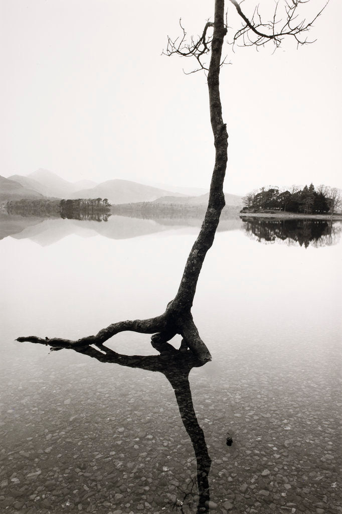 Detail of Flooded Tree by Fay Godwin