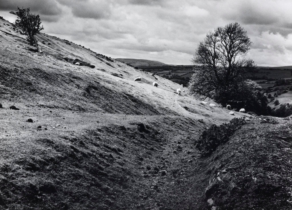 Detail of Aberedw Hill by Fay Godwin