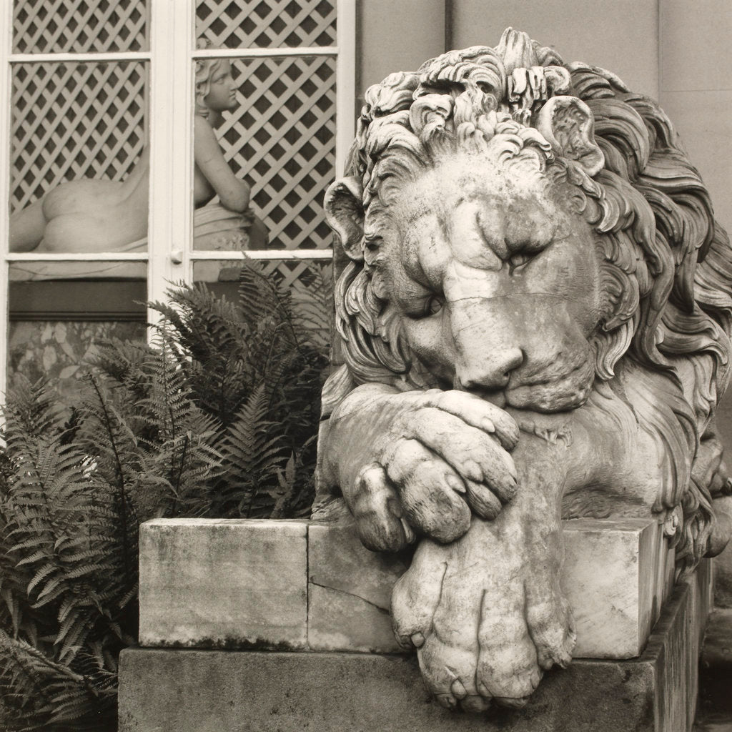 Detail of Chatsworth Lion by Fay Godwin