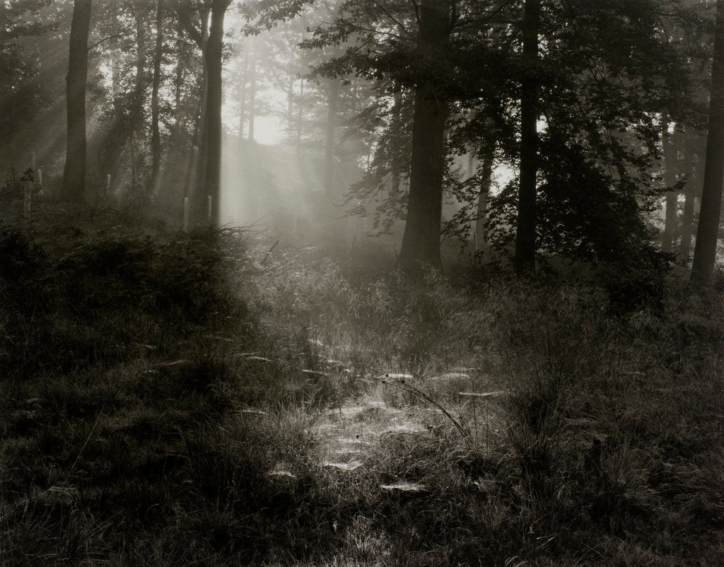 Detail of Forest by Fay Godwin