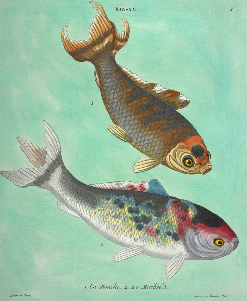 Detail of Kin-Yu: a pair of fish print by Edme Billardon-Sauvigne