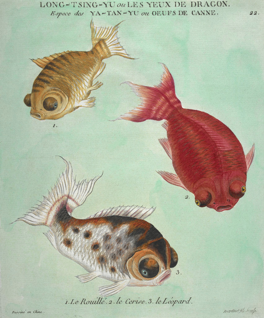 Detail of Long-Tsing-Yu trio of fish print by Edme Billardon-Sauvigne