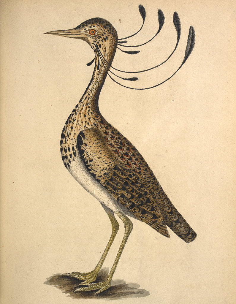 Detail of Florican by Anonymous