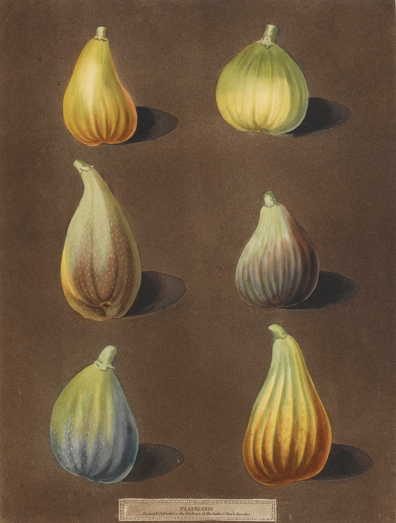 Detail of Figs by George Brookshaw
