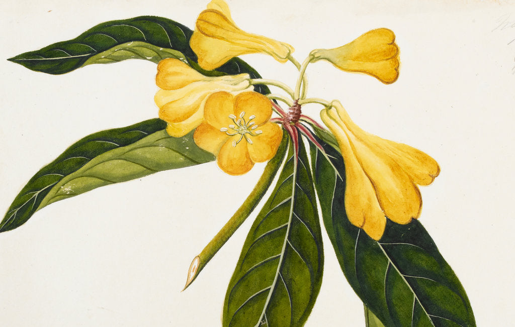 Detail of Rhododendron by Pieter de Ruyter