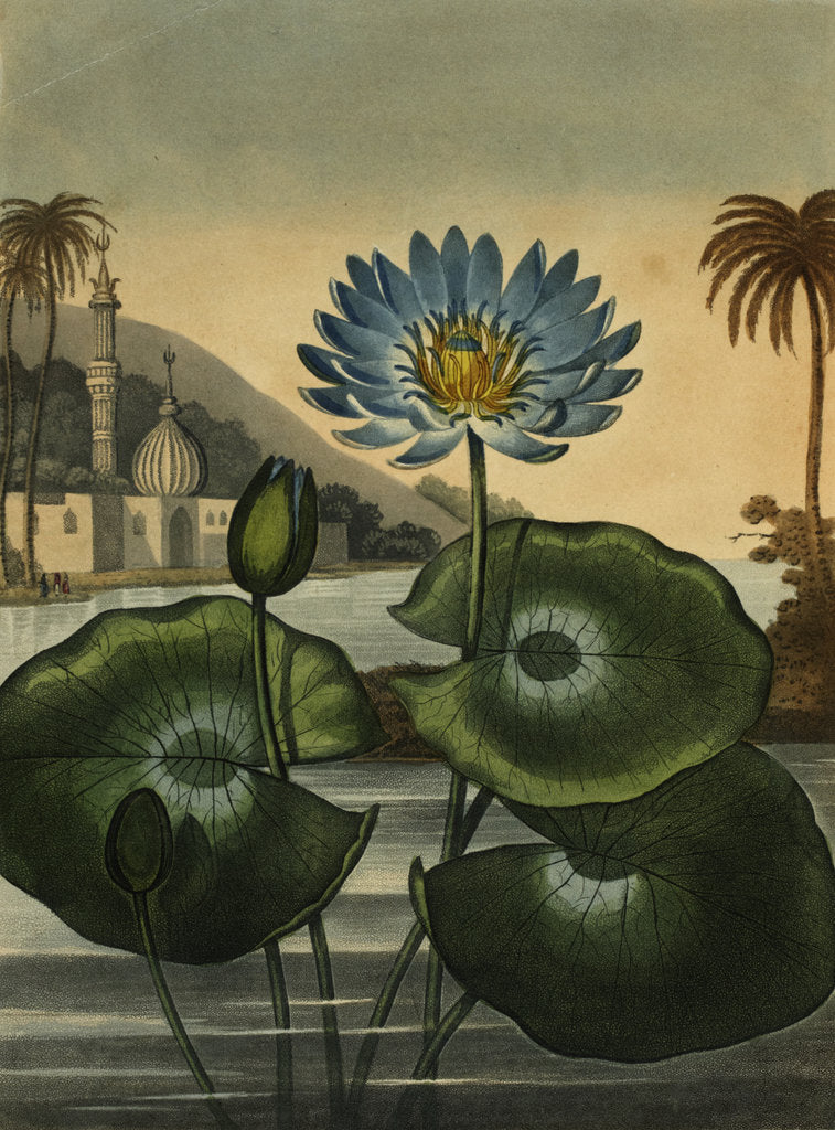 Detail of Blue lotus by Stadler