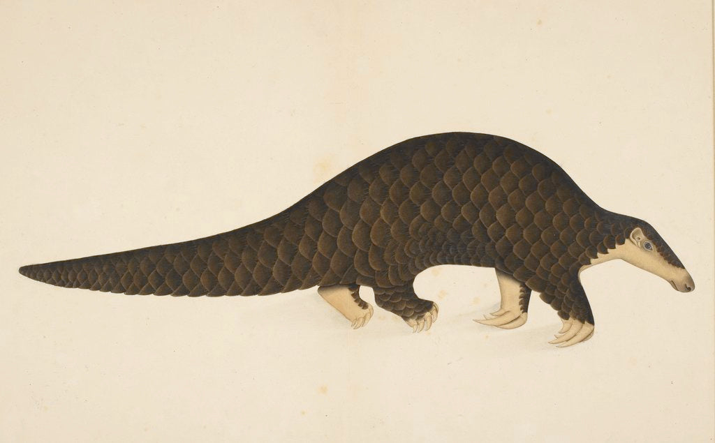 Detail of A scaly anteater by Anonymous