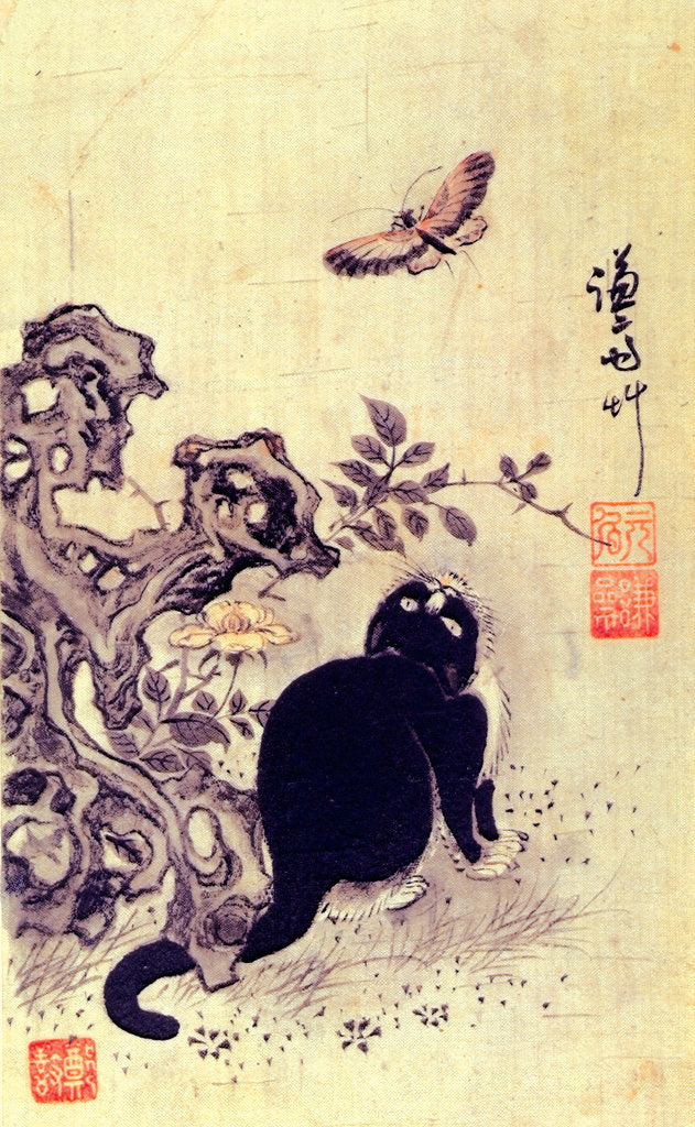 Detail of Cat watching a butterfly by Anonymous