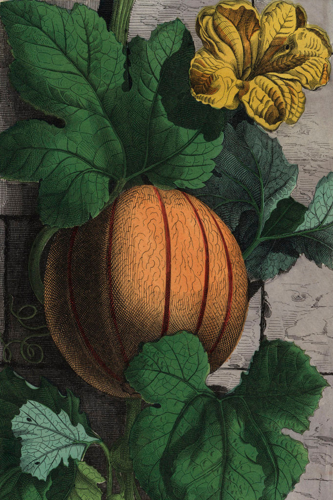 Detail of Melon by Qian Weicheng