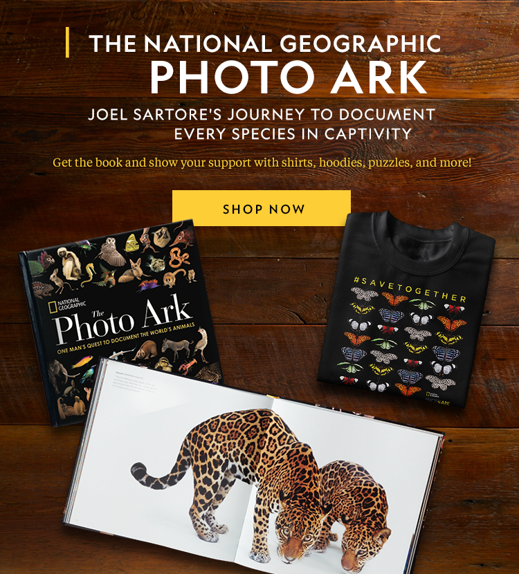 Nat geo wild gifts for christmas