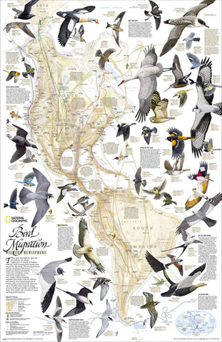 Bird Migration, Western Hemisphere Wall Map - Laminated (20.25 x 31.25 inches)